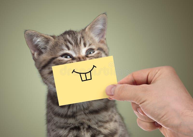 Gatto felice con il sorriso divertente su cartone fotografie stock