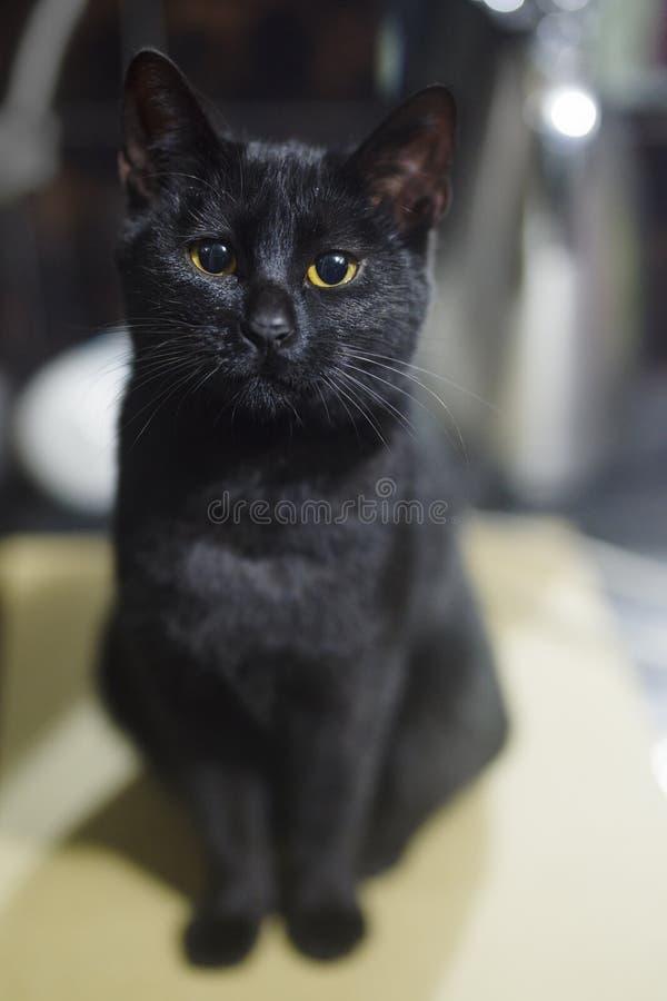 Gatto femminile nero nel bagno fotografia stock