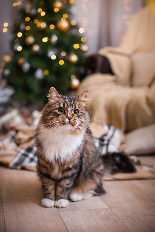 Gatto, feste del nuovo anno, natale, albero di Natale fotografia stock libera da diritti