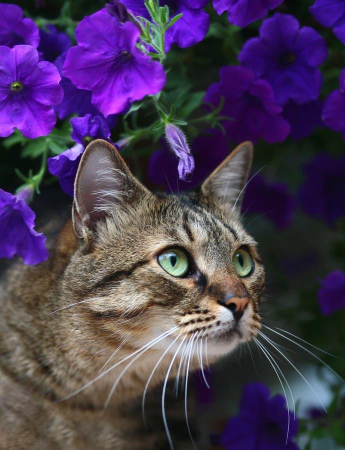 Gatto in fiori. fotografia stock libera da diritti