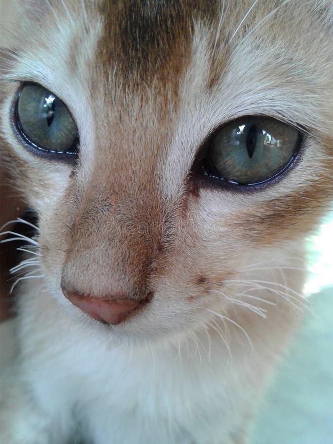 gatto, gattino, purulento fotografia stock