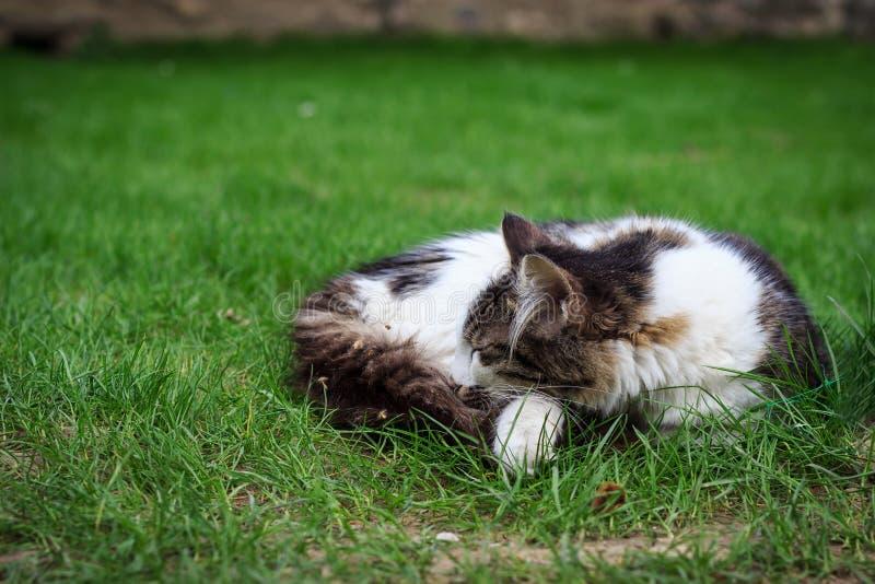 Gatto grazioso che dorme sull'erba verde immagini stock libere da diritti