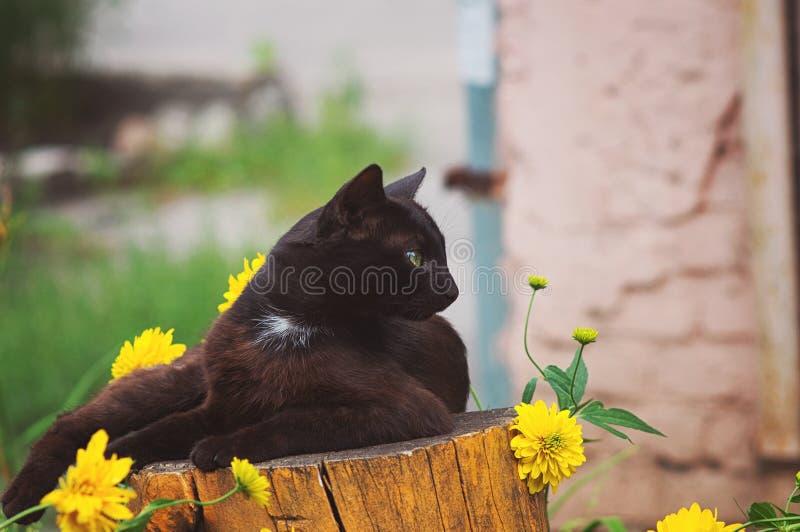 Gatto grazioso nero della via che riposa su un ceppo vicino ai fiori immagini stock libere da diritti
