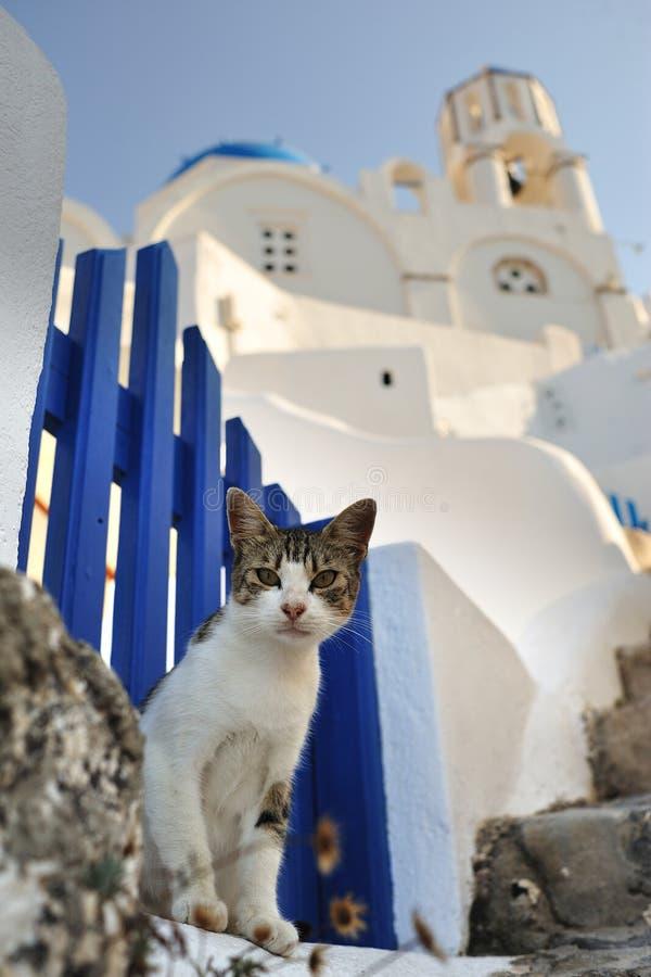 Gatto in Grecia immagine stock