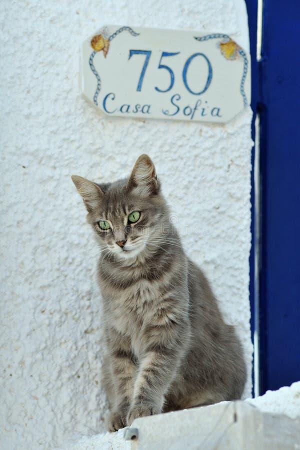 Gatto in Grecia fotografie stock