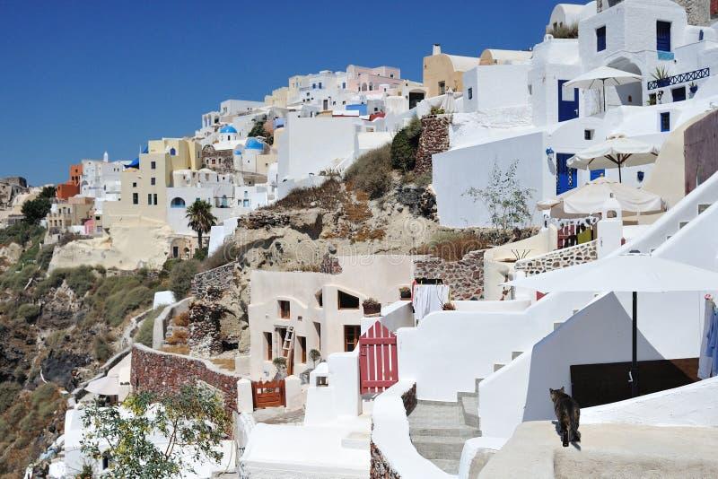 Gatto in Grecia fotografia stock