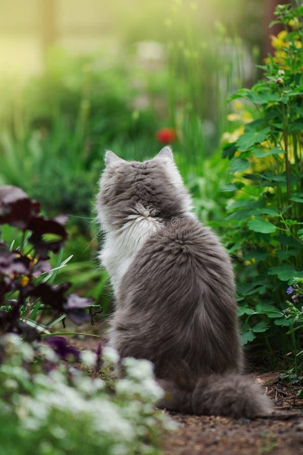 Gatto grigio che gioca nel giardino Gatto nel giardino fotografie stock