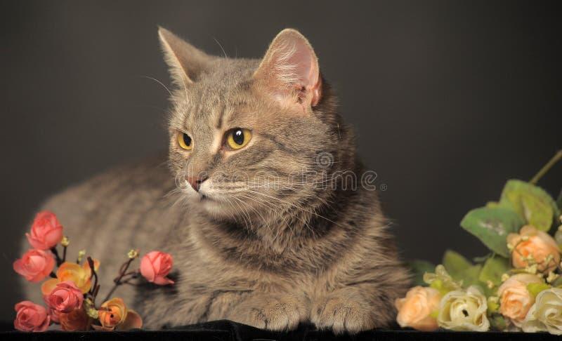 Gatto grigio su fondo grigio con i fiori fotografie stock