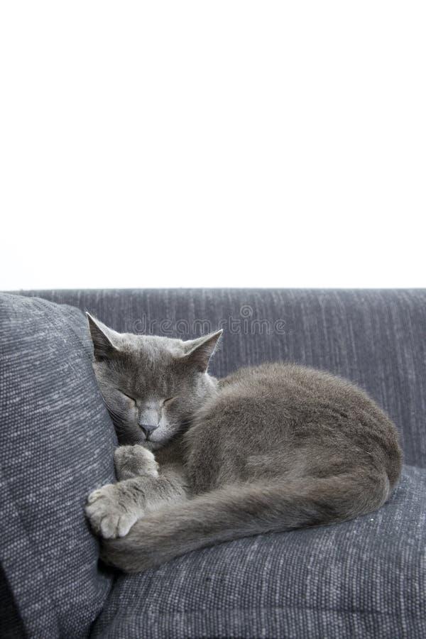 Gatto grigio su un sofà immagini stock