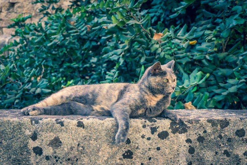 Gatto grigio sveglio che riposa sulla parete di vecchia città antica della capitale di Rodi fotografie stock libere da diritti