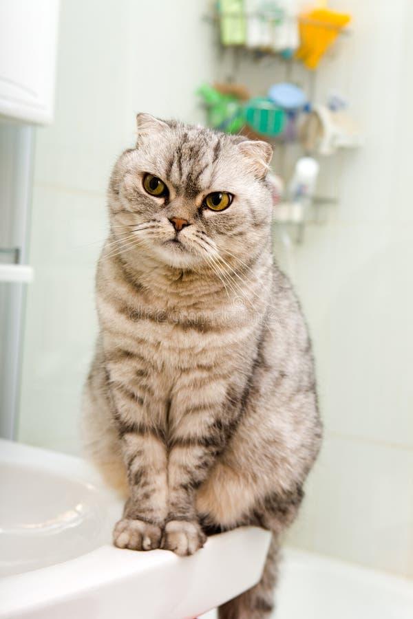 Gatto grigio in una stanza da bagno immagini stock