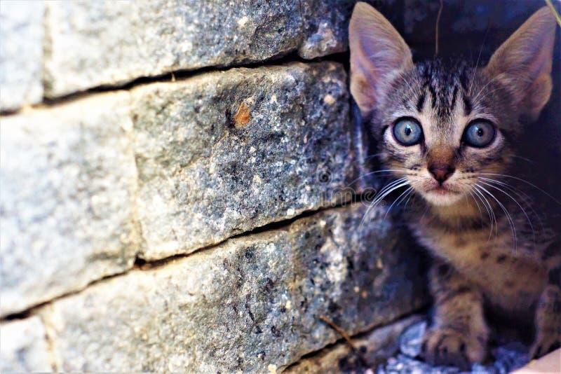 Gatto il più bello dei felines immagini stock
