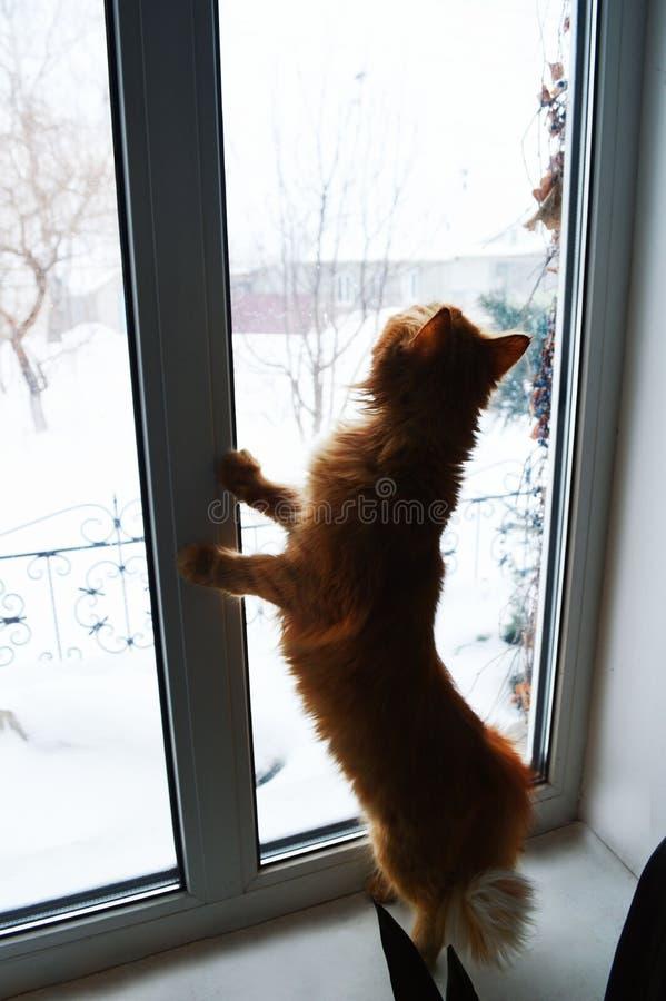 Gatto inquisitore su una finestra fotografia stock