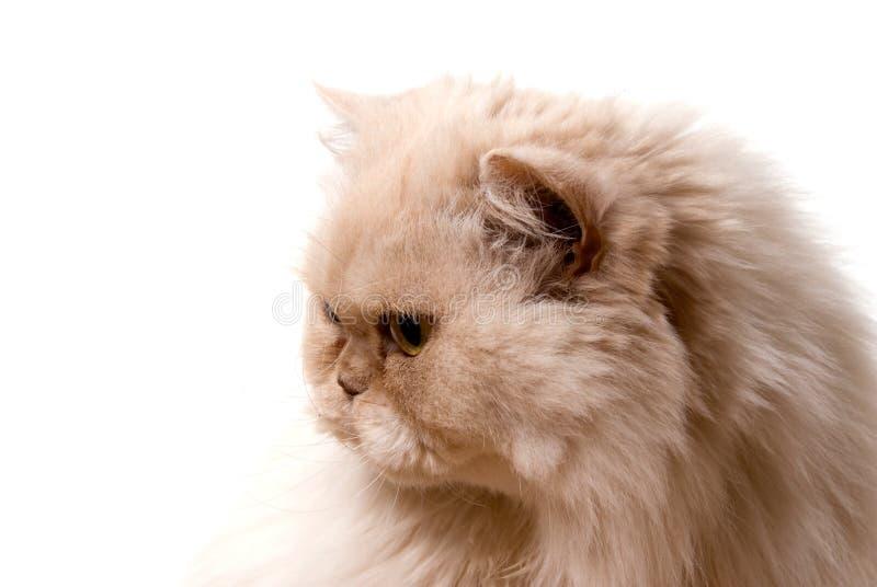 Gatto-Io immagini stock