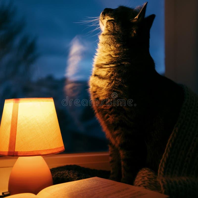 Gatto, lampada da tavolo e libro Casa accogliente nel crepuscolo fotografia stock