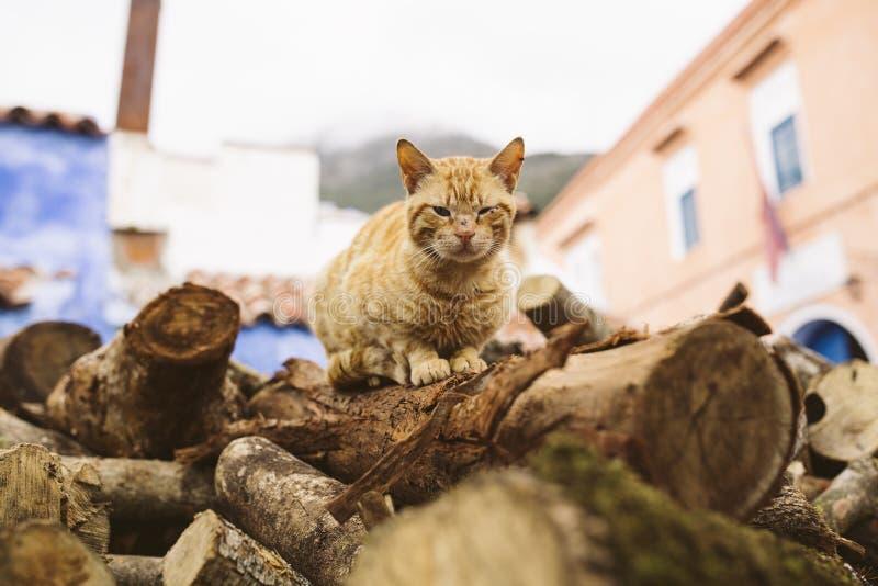 Gatto in marocco immagini stock