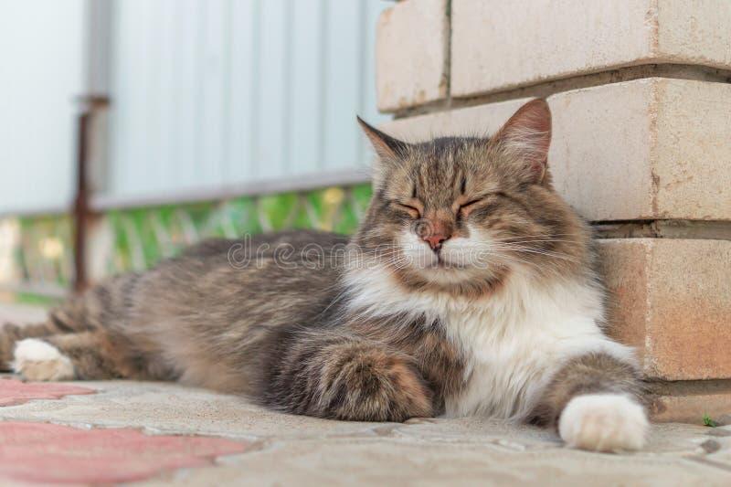 Gatto maschio tricolour lanuginoso sulla via Da sopra il gatto splendido eterogeneo che si trova e che riposa con gli occhi chius immagine stock