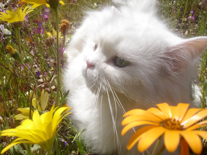 Gatto nei Wildflowers 2 immagine stock