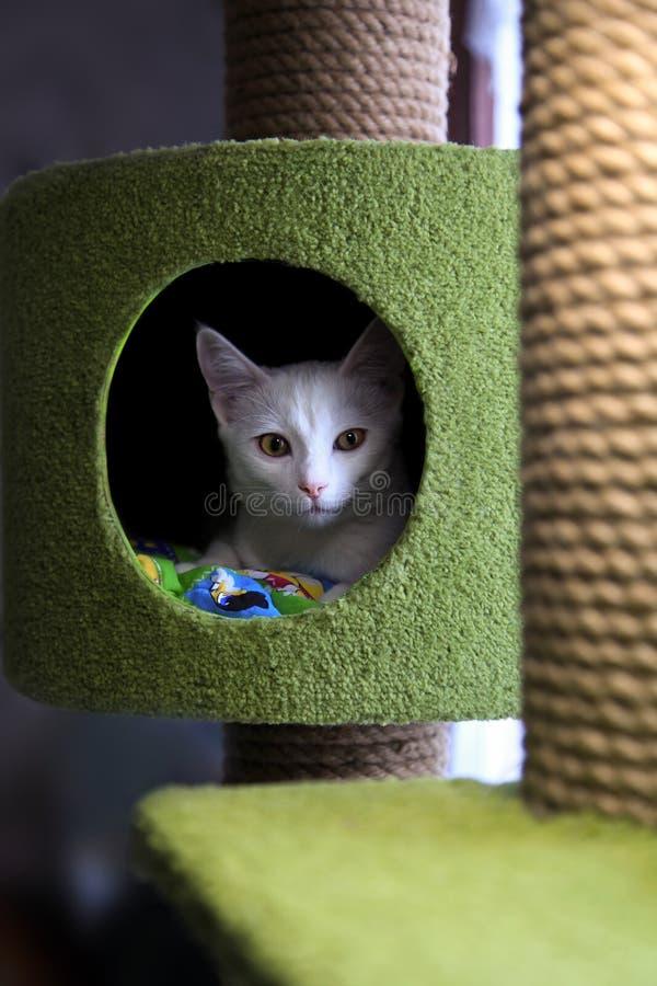 Gatto nel complesso di gioco per i gatti Un'illustrazione di un condominio/casetta per giocare del gatto con i giocattoli e quatt fotografia stock libera da diritti