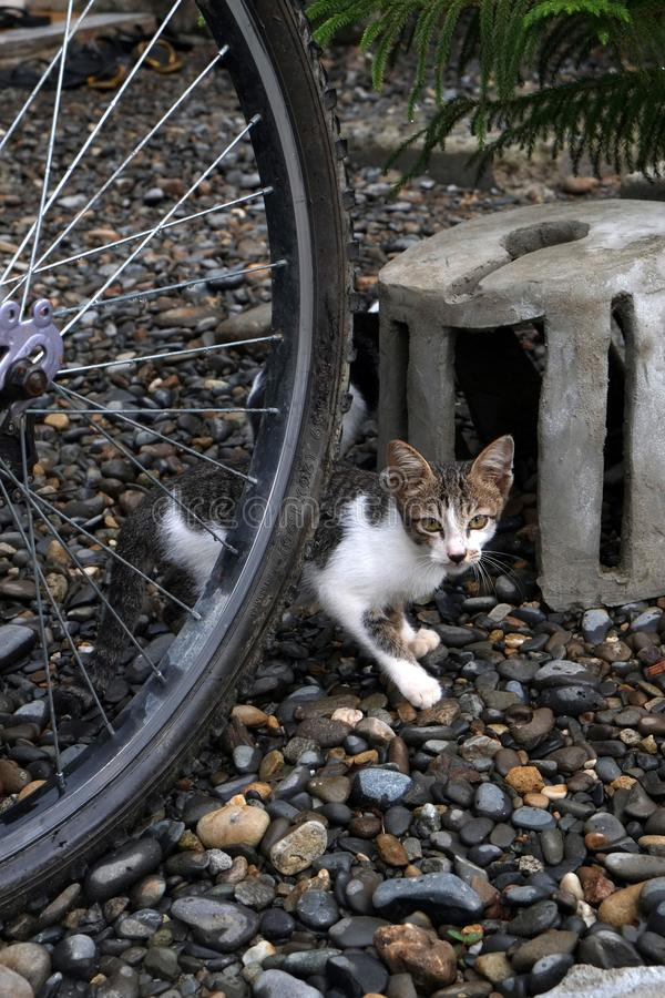 Gatto nel giardino 2 immagine stock