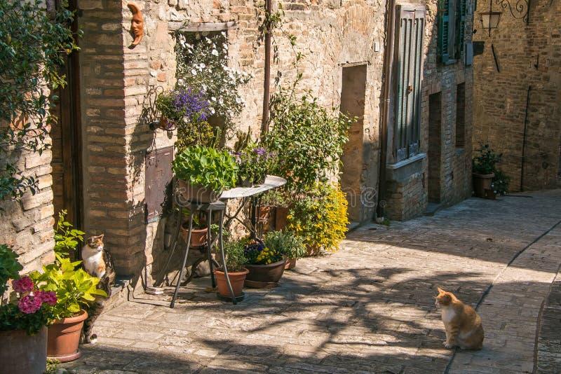 Gatto nel vecchio vicolo del villaggio medievale immagini stock libere da diritti