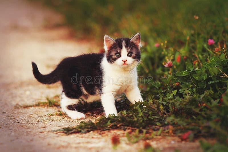 Gatto nell'erba fotografia stock