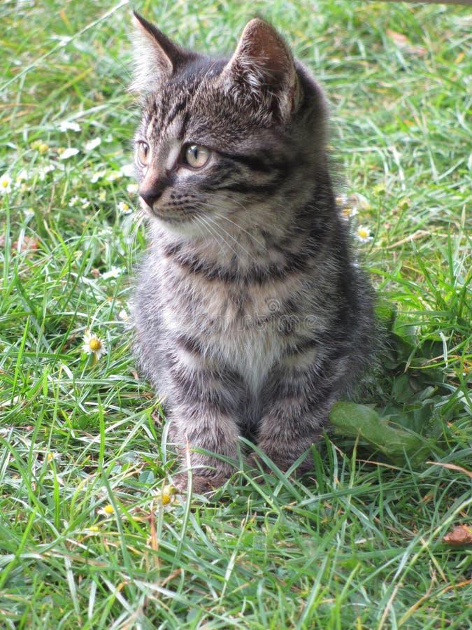 Gatto nell'erba del Th fotografia stock