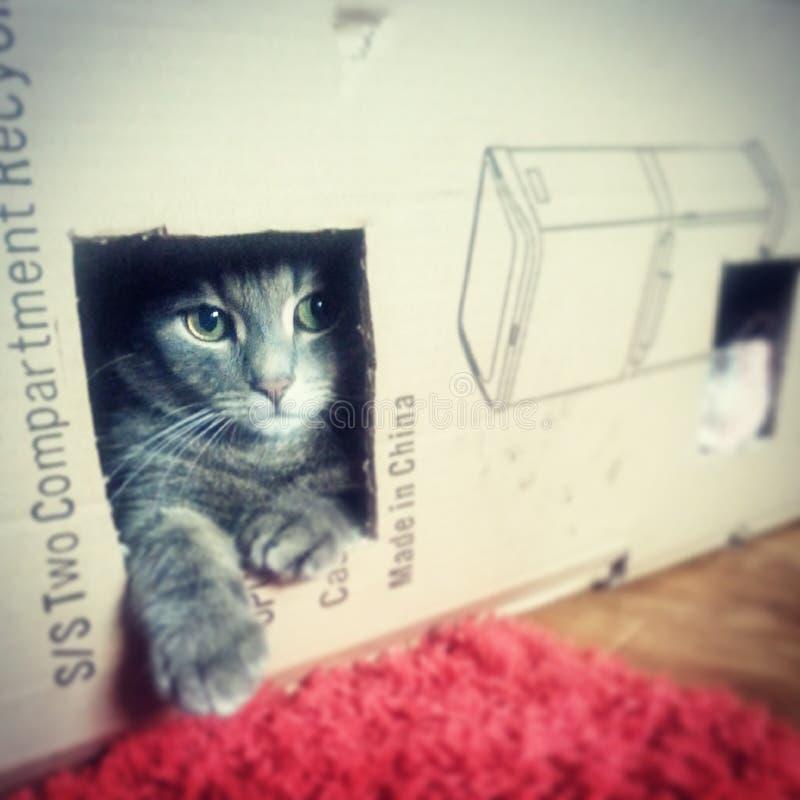 Gatto nella scatola fotografia stock libera da diritti