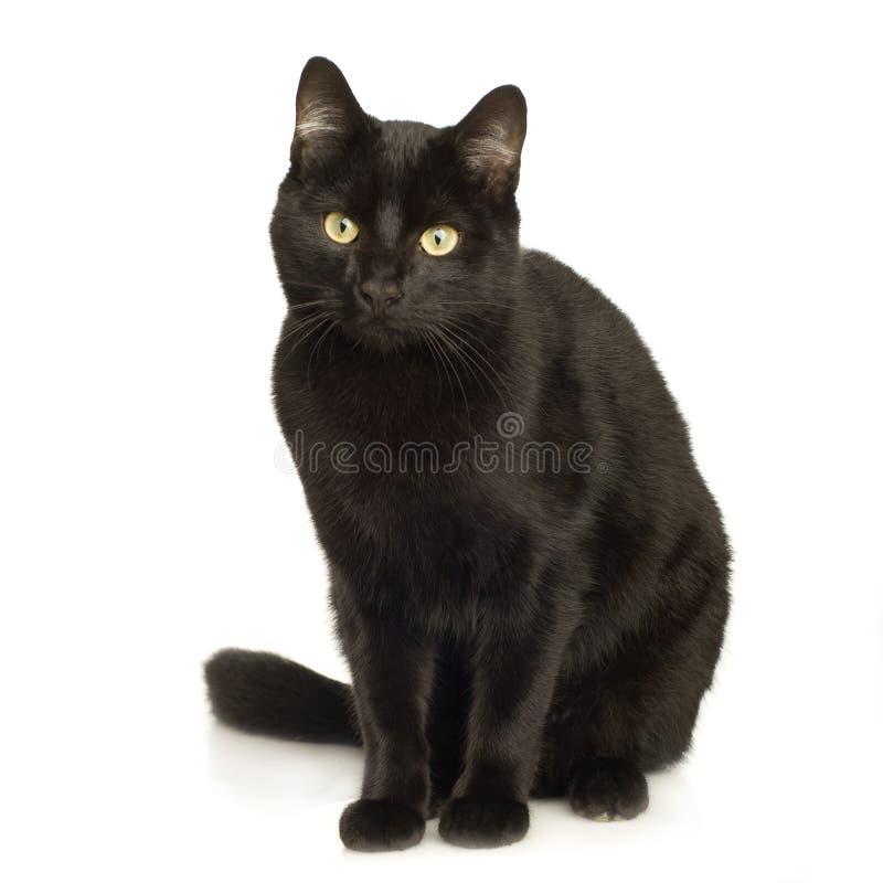 Download Gatto nero immagine stock. Immagine di gatto, studio, creatura - 3885723