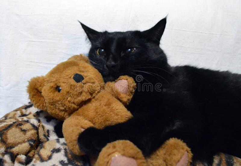 Gatto nero adorabile con un orsacchiotto fotografia stock libera da diritti