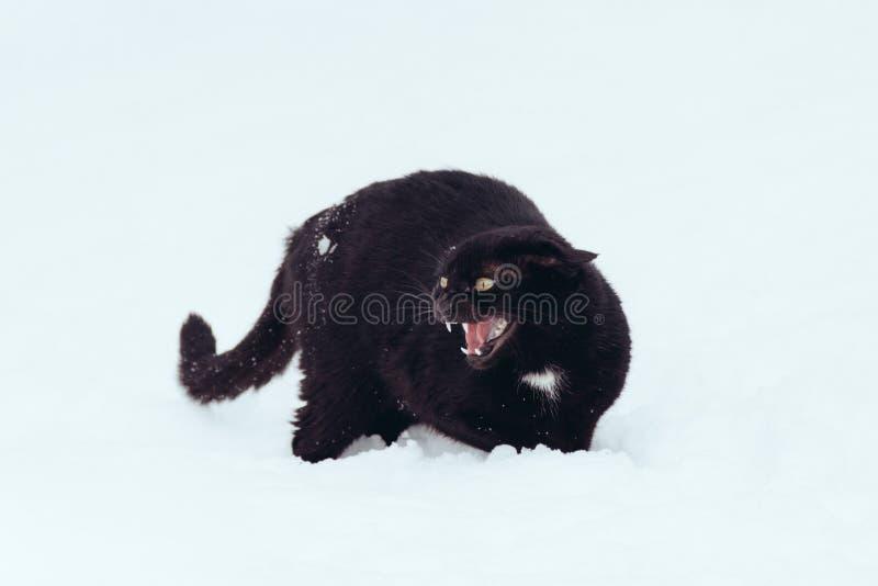 Gatto nero arrabbiato su una neve fotografia stock