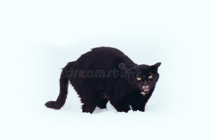 Gatto nero arrabbiato su una neve fotografia stock libera da diritti
