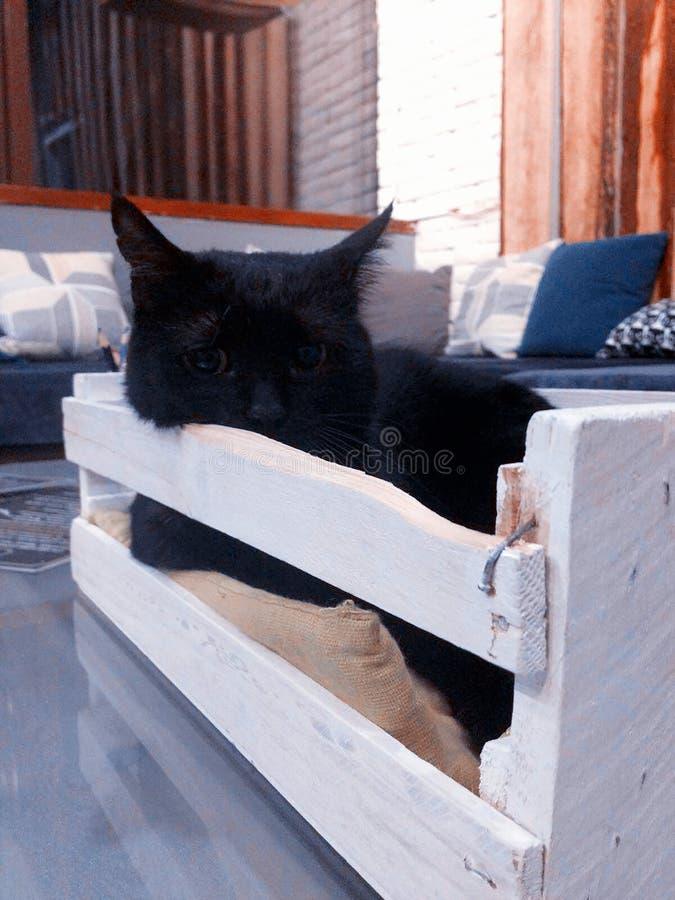 Gatto nero in casella fotografia stock libera da diritti