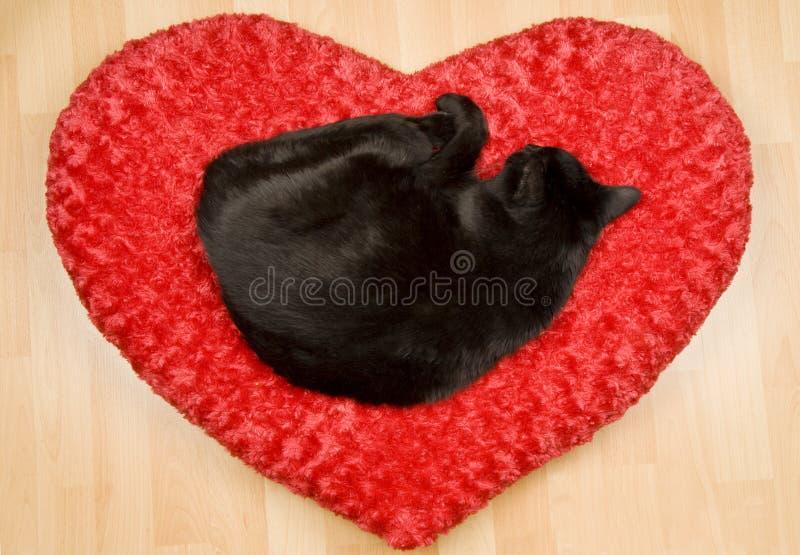 Gatto nero che dorme su un cuscino fotografia stock