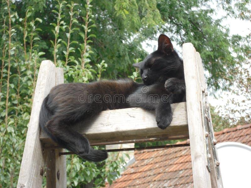 gatto nero che riposa sulla scala fotografia stock libera da diritti