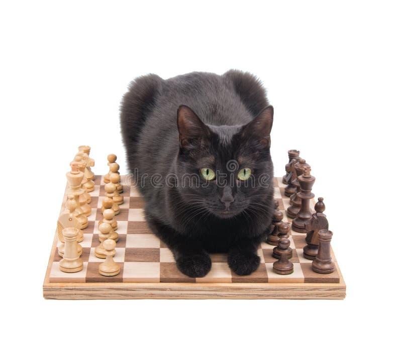 Gatto nero che si riposa in mezzo ad un gioco di scacchi immagini stock libere da diritti