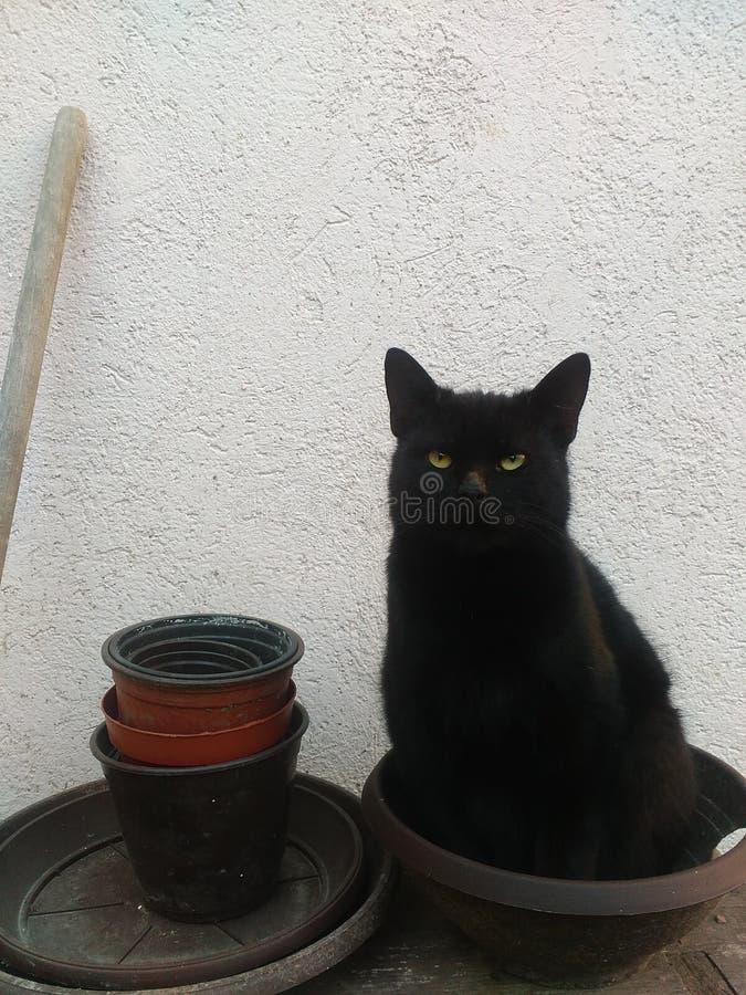 Gatto nero che si siede in vaso di fiore fotografie stock libere da diritti