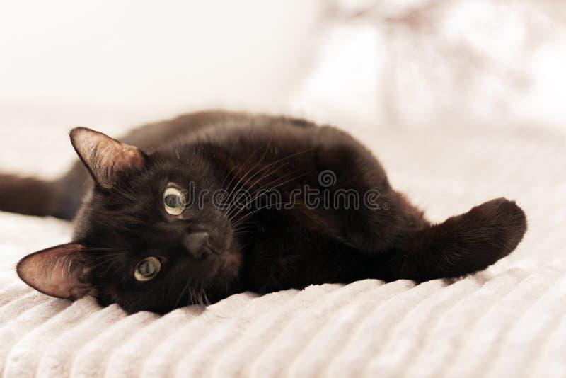 Gatto nero che si trova sulla copertura grigia della pelliccia sul letto fotografie stock libere da diritti