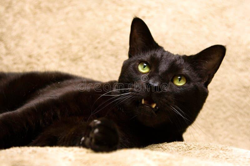 Gatto nero con la bocca aperta immagine stock libera da diritti