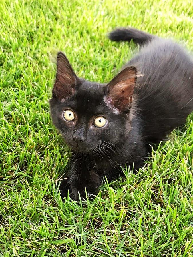Gatto nero del bambino immagine stock
