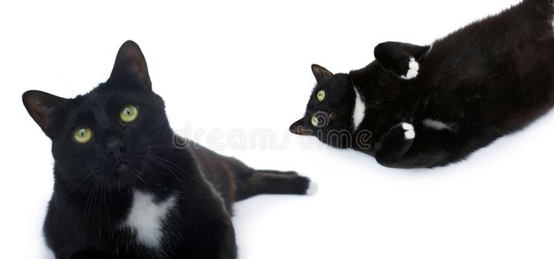 Gatto nero di menzogne isolato sopra i precedenti bianchi fotografia stock libera da diritti