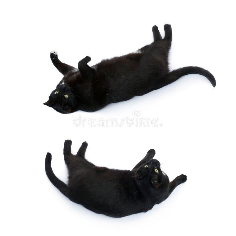 Gatto nero di menzogne isolato sopra i precedenti bianchi immagini stock