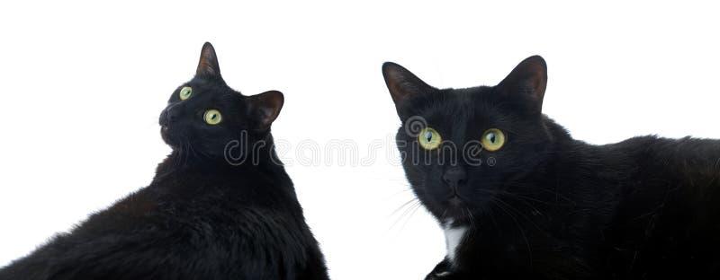 Gatto nero di menzogne isolato sopra i precedenti bianchi immagini stock libere da diritti