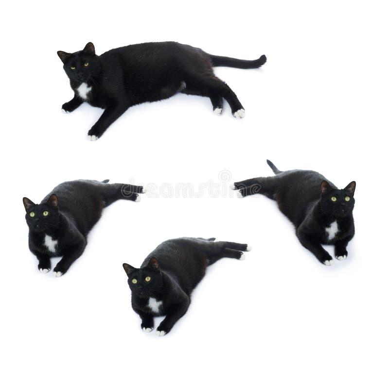 Gatto nero di menzogne isolato sopra i precedenti bianchi fotografia stock