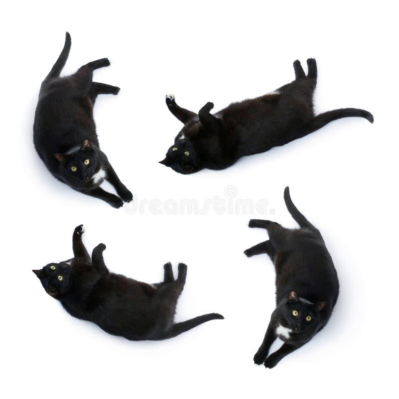 Gatto nero di menzogne isolato sopra i precedenti bianchi fotografie stock
