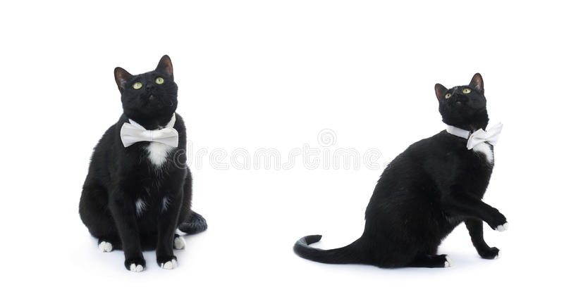 Gatto nero di seduta isolato sopra i precedenti bianchi immagine stock libera da diritti