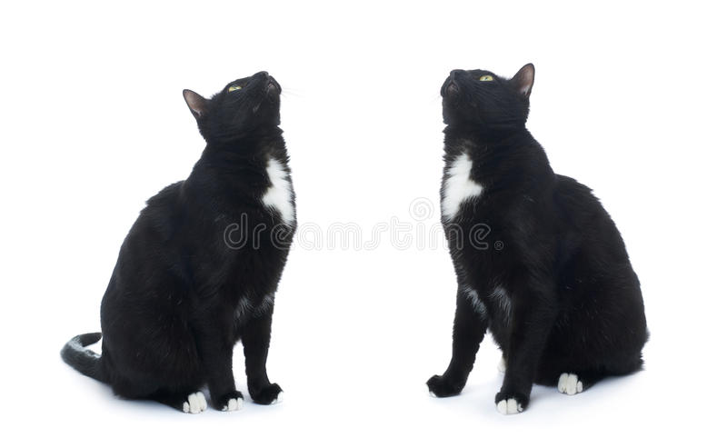 Gatto nero di seduta isolato sopra i precedenti bianchi fotografia stock libera da diritti