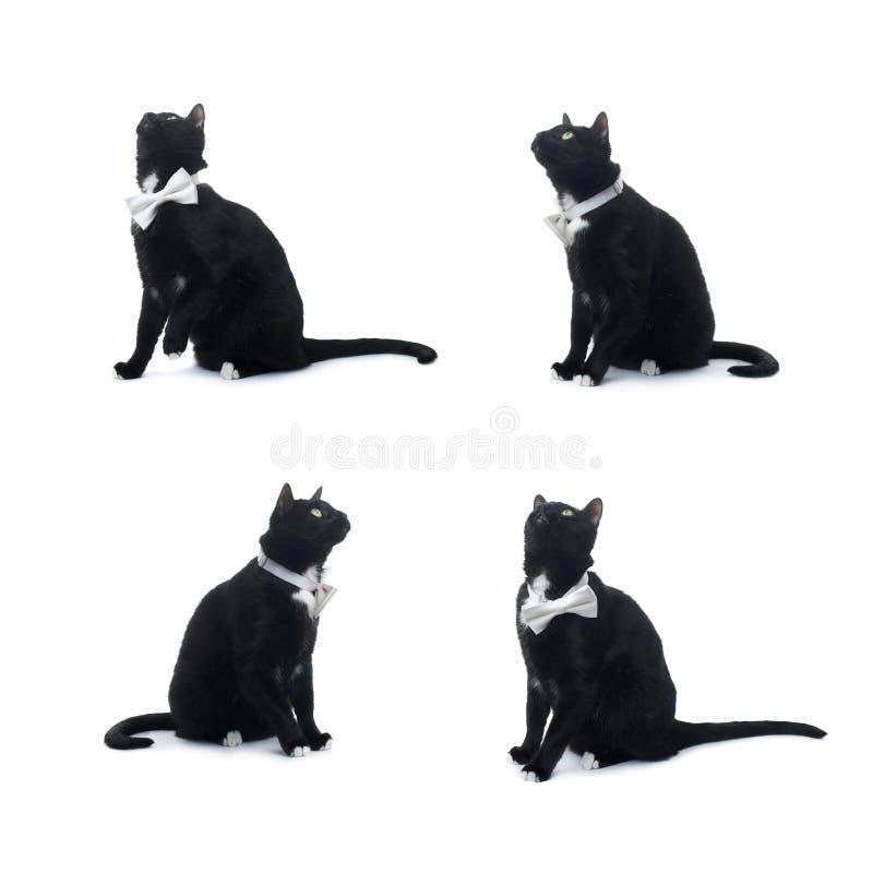 Gatto nero di seduta isolato sopra i precedenti bianchi fotografie stock libere da diritti