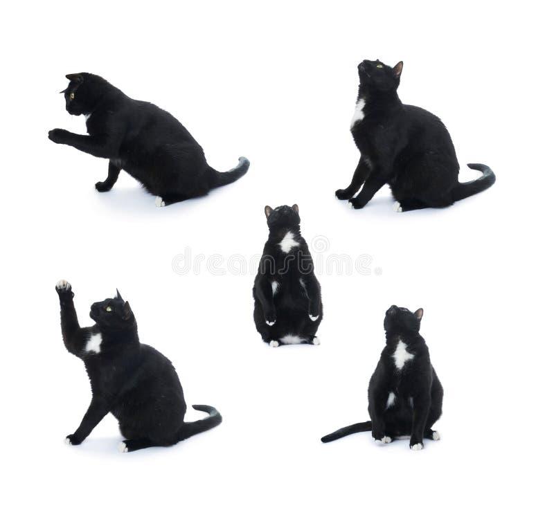 Gatto nero di seduta isolato sopra i precedenti bianchi immagine stock