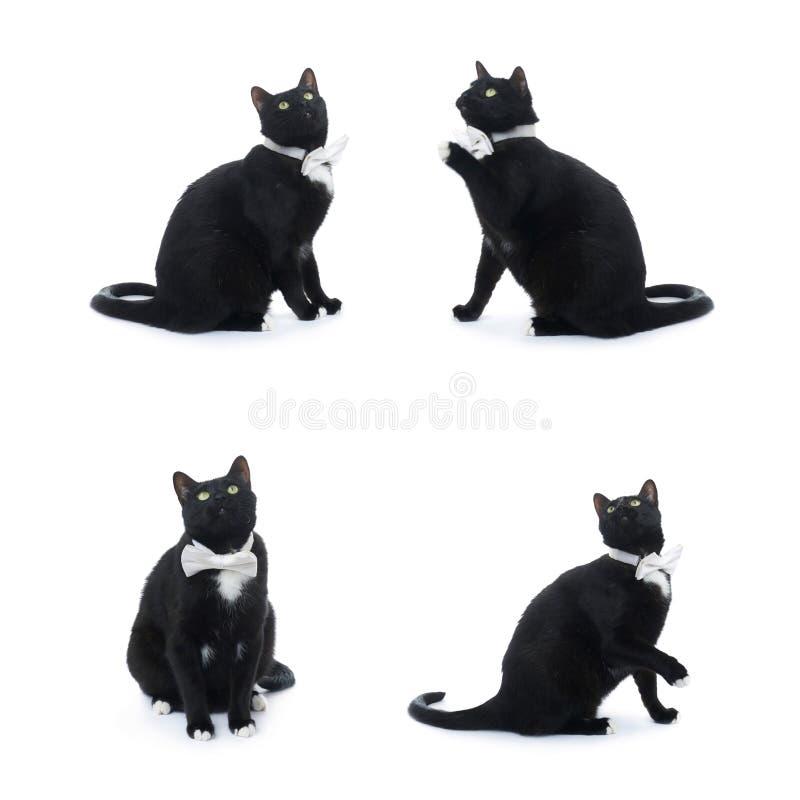 Gatto nero di seduta isolato sopra i precedenti bianchi fotografia stock